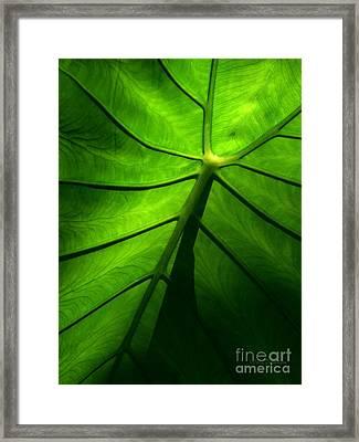 Sunglow Green Leaf Framed Print by Patricia L Davidson