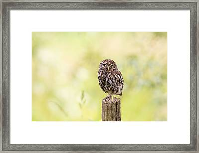 Sunken In Thoughts - Staring Little Owl Framed Print by Roeselien Raimond