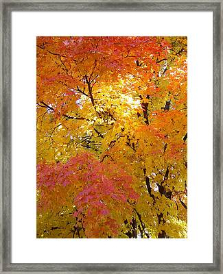 Sunkissed 2 Framed Print by Elizabeth Sullivan