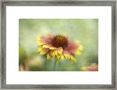 Sunkissed Framed Print by Cindy McDonald
