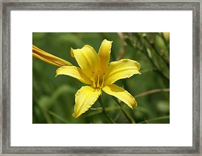 Sunkissed Framed Print by Debbie May