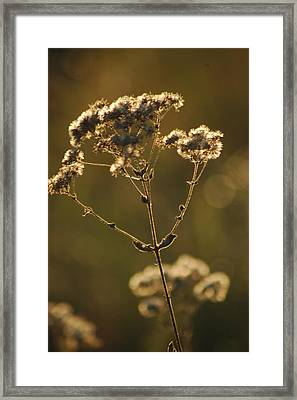 Sunkissed Framed Print by Lori Mellen-Pagliaro
