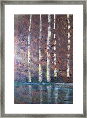 Sunlight And Birch Framed Print