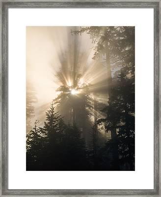 Sunlight And Fog Framed Print