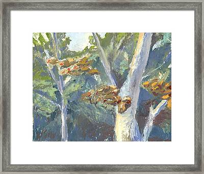 Sunlight And Sycamores Framed Print