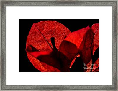 Sunlight Behind The Petals Framed Print