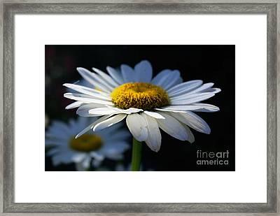 Sunlight Flower Framed Print by John S