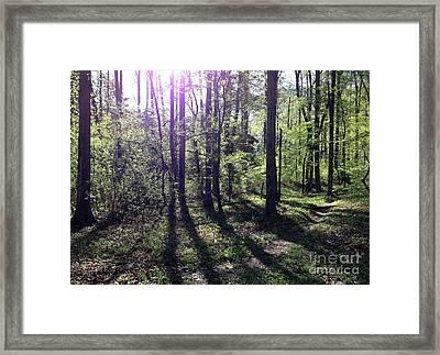 Sunlight From The East Framed Print