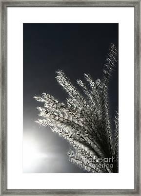 Sunlight Grass Framed Print by Steve Augustin