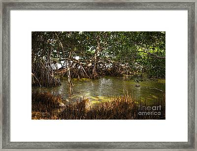 Sunlight In Mangrove Forest Framed Print by Elena Elisseeva