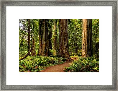 Framed Print featuring the photograph Sunlight In The Redwoods by James Eddy