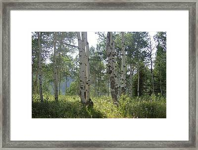 Sunlight In The Trees Framed Print by Susan Pedrini