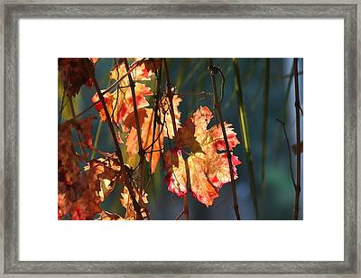 Sunlight In The Vineyard Framed Print by Art Block Collections
