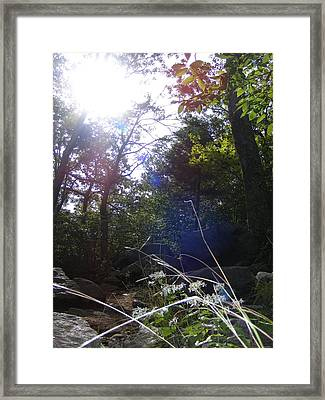 Sunlight On Forest Ground Framed Print by Alison Heckard
