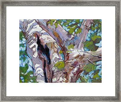 Sunlight On Sycamore Framed Print by John Lautermilch