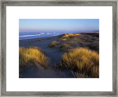 Sunlight On The Beach Grass Framed Print