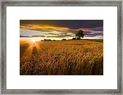 Sunlight On The Wheat Fields Framed Print