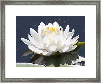 Sunlight On Water Lily Framed Print