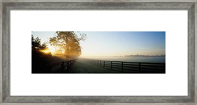 Sunlight Passing Through Trees, Horse Framed Print by Panoramic Images
