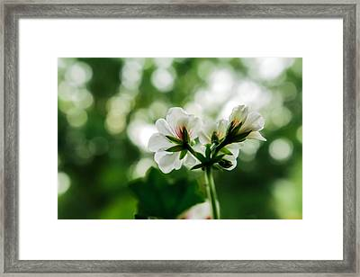 Sunlight Rain Framed Print