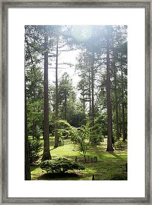 Framed Print featuring the photograph Sunlight Through The Trees by Scott Lyons