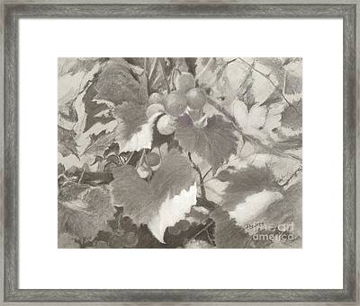 Sunlit Arbor Framed Print by Mary Lynne Powers