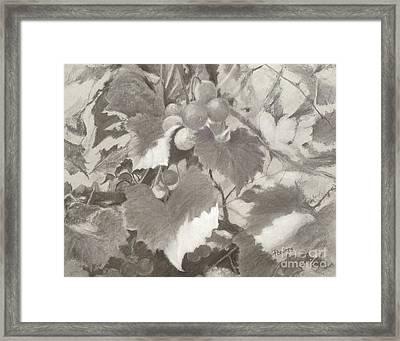 Sunlit Arbor Framed Print