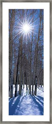 Sunlit Aspens Framed Print by Mikes Nature