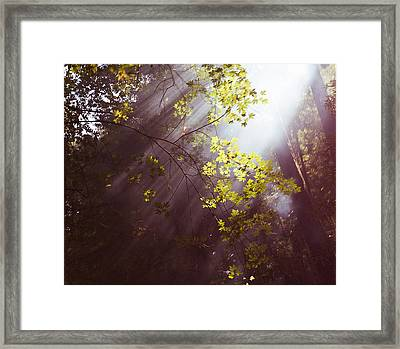 Framed Print featuring the photograph Sunlit Beauty by Lora Lee Chapman