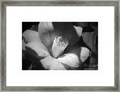 Sunlit Camellia - Black And White Nature Framed Print by Carol Groenen