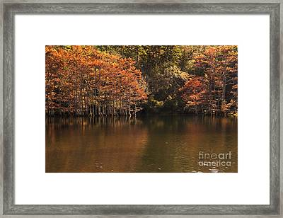 Framed Print featuring the photograph Sunlit Cypress Trees On Beaver's Bend by Tamyra Ayles