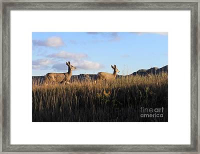 Sunlit Deer  Framed Print
