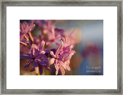 Sunlit Dream Framed Print