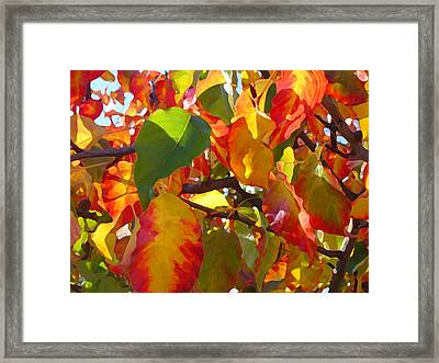Sunlit Fall Leaves Framed Print by Amy Vangsgard