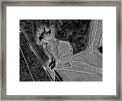 Sunlit Kitty Black And White Framed Print by Thomas Woolworth