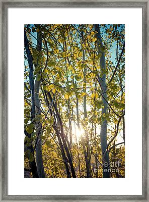 Sunlit Leaves Framed Print by Lisa Killins