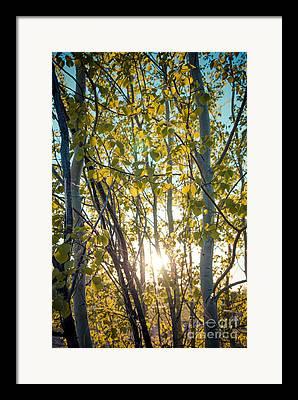 Sunflare Digital Art Framed Prints