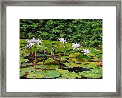Sunlit Lily Pond By Kaye Menner Framed Print