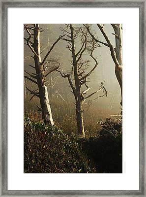 Sunlit Morning Framed Print