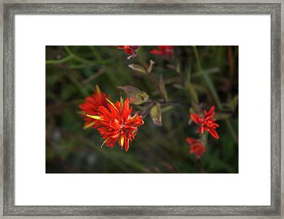 Sunlit Paintbrush Framed Print