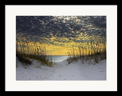 Sea Oats Framed Prints