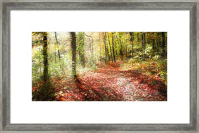 Sunlit Path Framed Print by Dawn Braun
