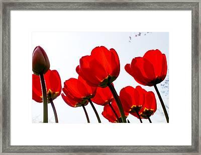 Sunlit Petals Framed Print by Sonja Anderson