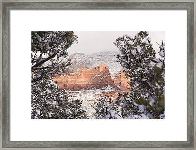 Sunlit Red Framed Print
