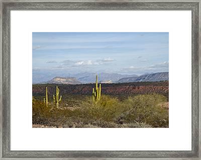 Sunlit Saguaros Framed Print