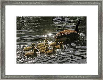 Framed Print featuring the photograph Sunlit Stroll by Donna Kennedy
