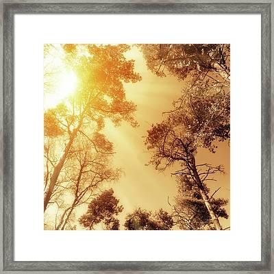 Sunlit Tree Tops Framed Print by Wim Lanclus