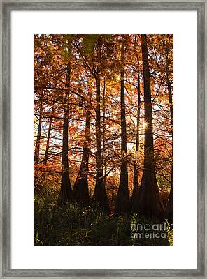 Framed Print featuring the photograph Sunlit Trees At Lake Murray by Tamyra Ayles