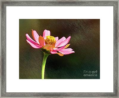 Sunlit Uplifting Beauty Framed Print