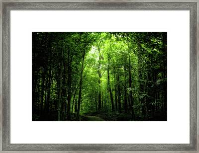 Framed Print featuring the photograph Sunlit Woodland Path by Lars Lentz